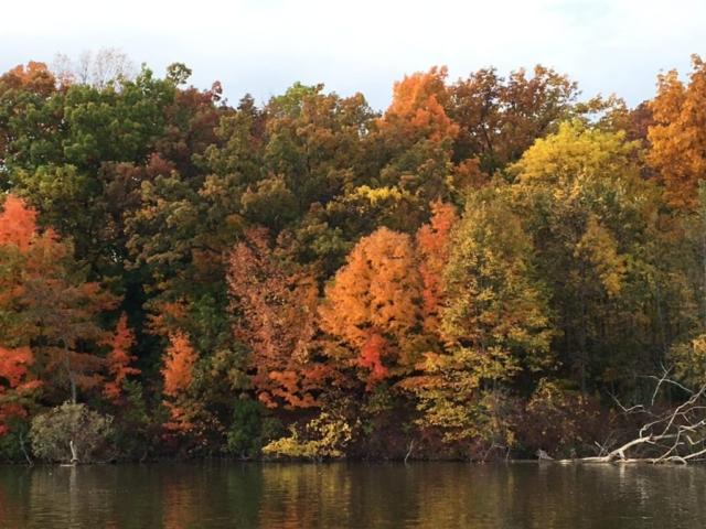 Orange Fall Colors along Fox River